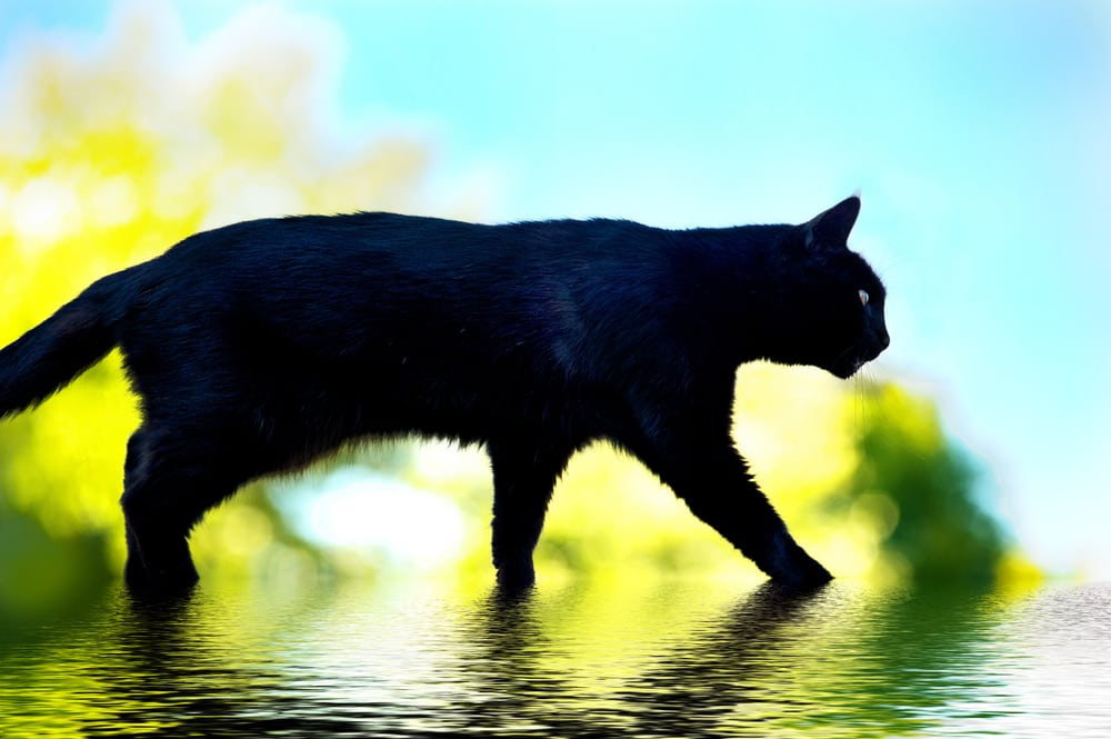black cat crossing_neuromyths_tbmarketing_doncaster